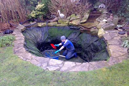 Pond life services maintenance fish care gardening for Ornamental fish pond maintenance